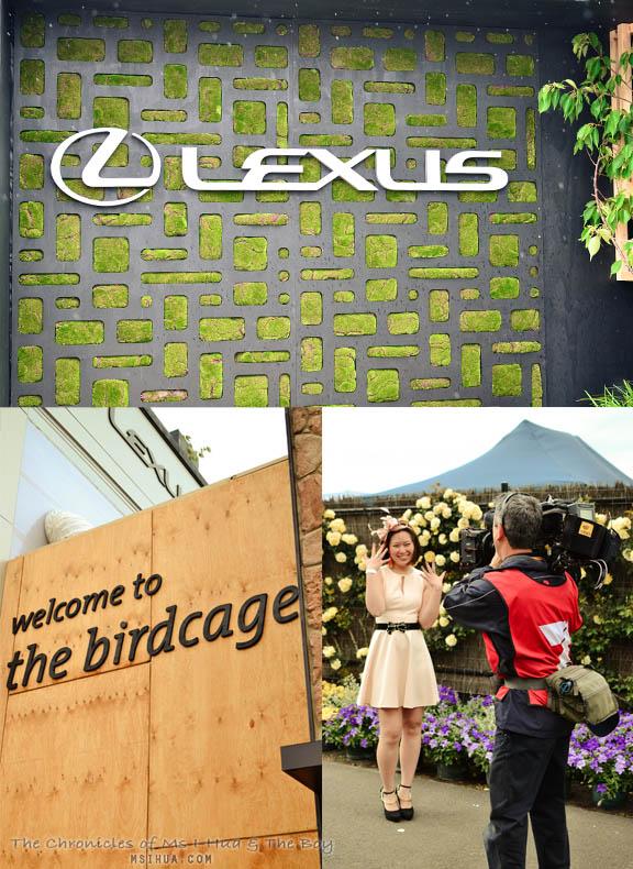 lexus_montage2
