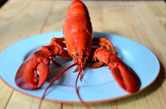 lobsterSquid_2