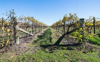 Victoria's High Country Harvest 2016 [Part 2]