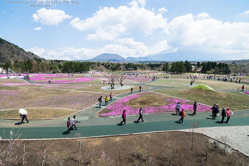 japanD1_1